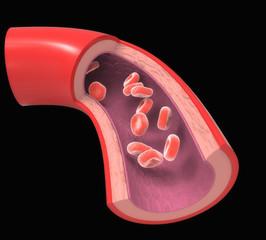 Arteria coronaria normal