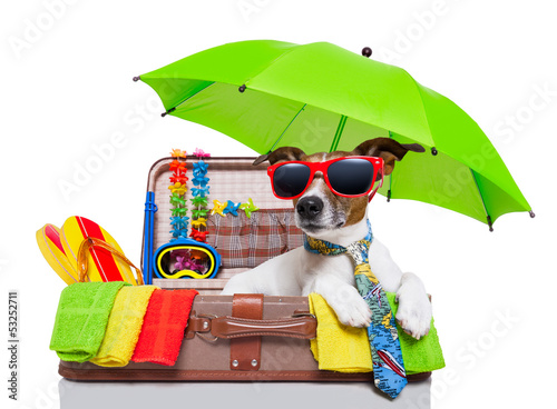 canvas print picture summer holiday dog