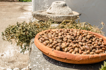 Argan fruits in a Women Cooperative in Essaouira