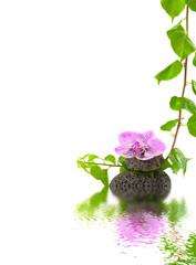 composition zen, orchidée sur galet