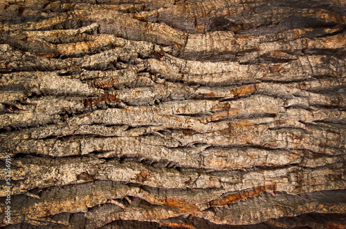 Aluminium Textures bark of an old oak