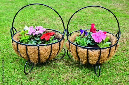 Two hanging baskets on the lawn