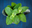 Mint in the garden watering