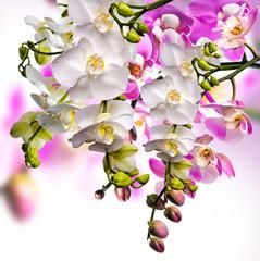 Wellness: Orchideen