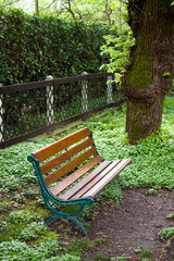 Bench in the grove