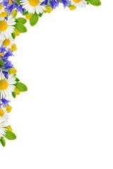 Corner with wild flowers