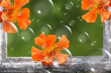 Blumen in Holzrahmen mit Seifenblasen