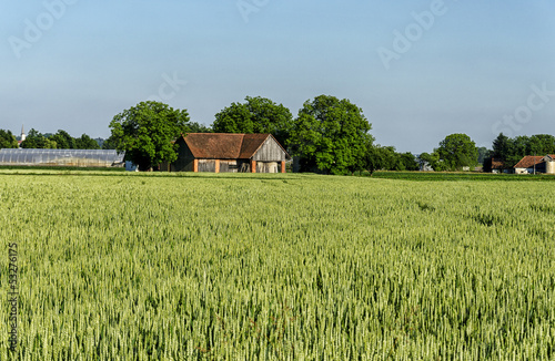 Vast Wheat Field