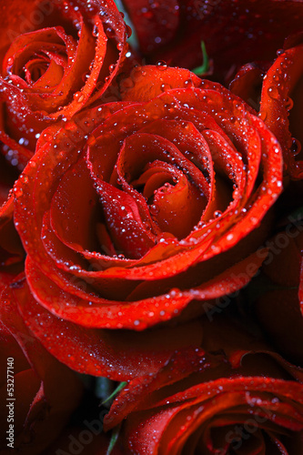 Closeup of beautiful red roses.
