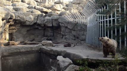 Sad bear in the zoo