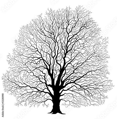 Baum - 53280981
