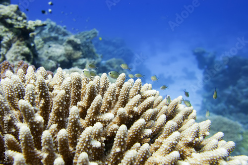 Red Sea corals house for Fishes close up portrait