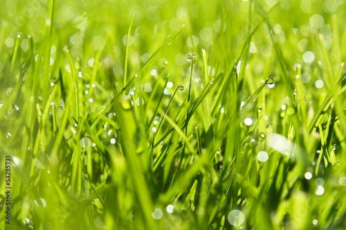 Gras  an der frischen Luft