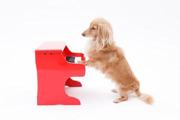 ピアノと犬