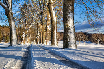 winterliche Allee zum Sophienhof