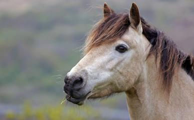 Pferdeprtrait
