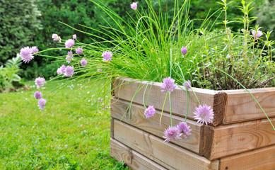plantes aromatiques dans jardinière