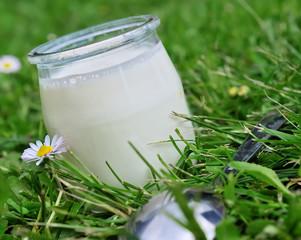 pot de yaourt dans l'herbe verte,nature