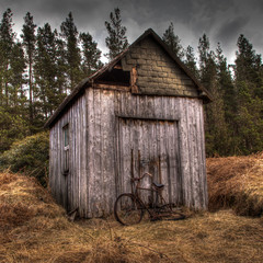 The Lonely Shed
