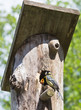 bird on birdhouse