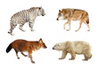 Carnivora mammals. Isolated over white