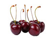 Several sweet cherries