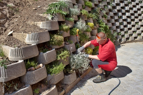 man, gardener relies flowers in retaining concrete wall