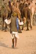 Pushkar Camel Mela. Rajasthan, India.