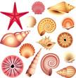 seashells isolated on white vector set - 53301996