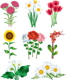 flowers photo-realistic vector set
