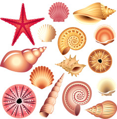 seashells isolated on white vector set