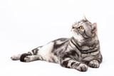 Fototapety Cat lying on the floor