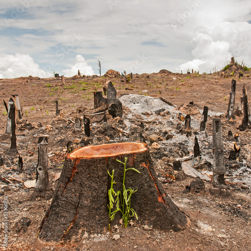 rainforest cut and burned to plant crops, Thailand