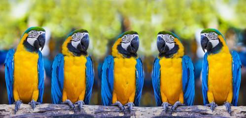 macaws sitting on log.