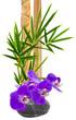 composition zen, orchidée sur galet et bambou