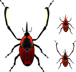 Beetle Silhouettes
