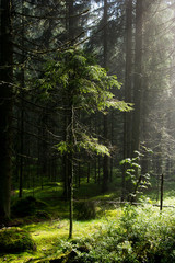 Forest sun light rays