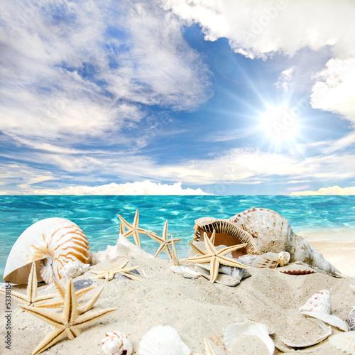 Gute Reise: Sonne, Strand, Muscheln und Seesterne