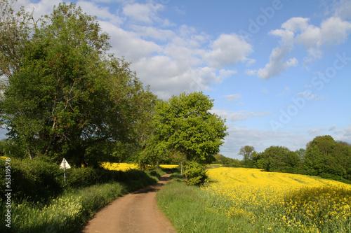 Petite route de campagne en Bourgogne au printemps