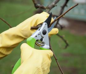 Hands with gloves of gardener doing maintenance work