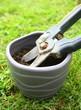 sécateur , outil de jardinage