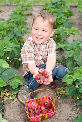 Kleiner Junge erntet Erdbeeren