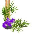 décor zen, orchidée sur galet et bambou