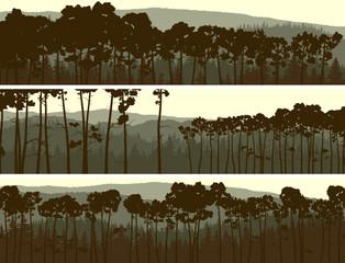 Horizontal banners of coniferous pinewood.