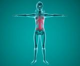 Corpo umano donna spina dorsale ai raggi x
