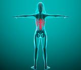 Corpo umano spina dorsale ai raggi x