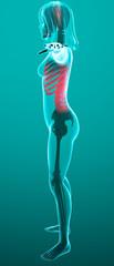 Corpo umano donna spina dorsale ai raggi x lato