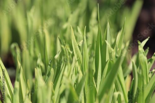 fresh herbs in the garden
