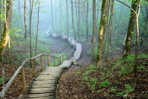 Fototapeta staiway in forest disappearing in strong fog