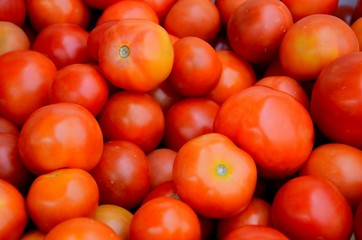 Stack of numerous tomatoes